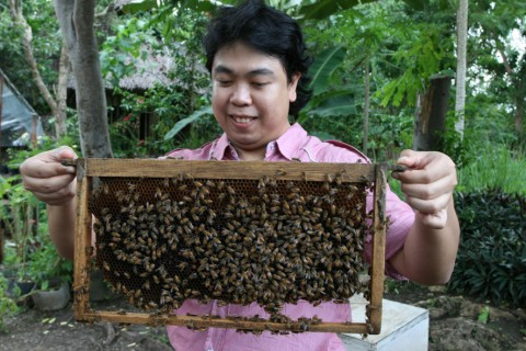 Mingling with the Bees at Bohol Bee Farm